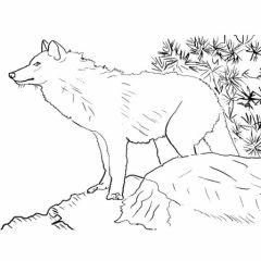 Soir e contes tib tains la cit des pyr n es br ves de montagne - Dessin du loup ...